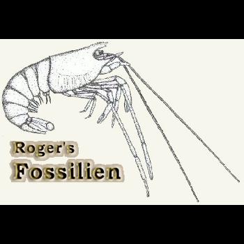 Roger's Plattenkalk Fossilienforum