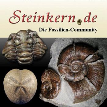 Steinkern.de - Die Fossilien-Community
