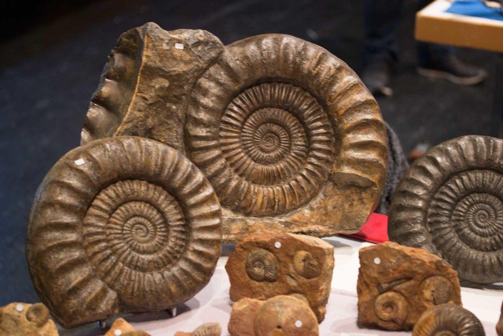 Ammoniten aus dem Schwabenland.