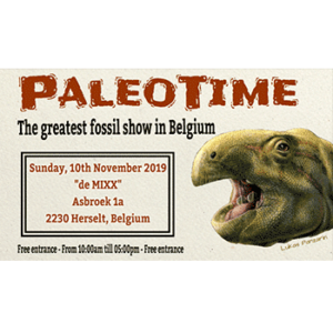 The greatest fossil show in Belgium